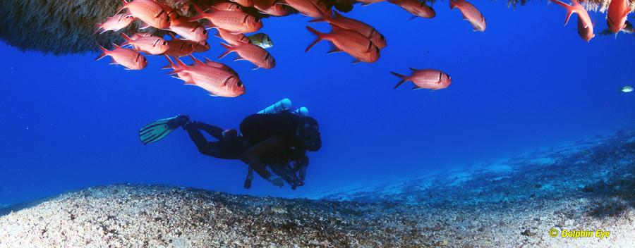 Deep Diver (OC,SCR,CCR)
