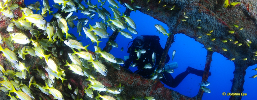 Recreational Rebreather Wreck Diver