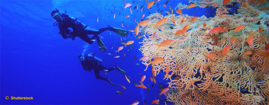 Drift Diver (OC,SCR,CCR)