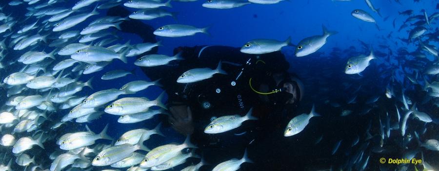 Rebreather Adv. EANx Diver