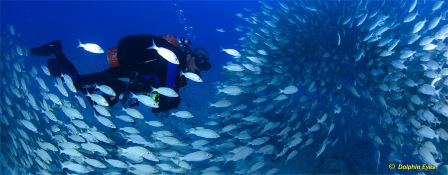 Advanced Recreational Trimix Diver (OC, SCR, CCR)
