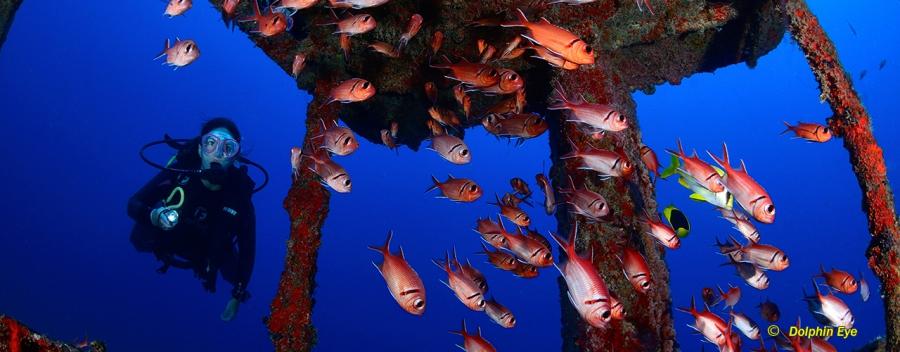 Wreck Diver (OC, RSCR, RCCR)